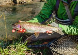 Visit harrisonburg virginia in the shenandoah valley and for Mossy creek fly fishing