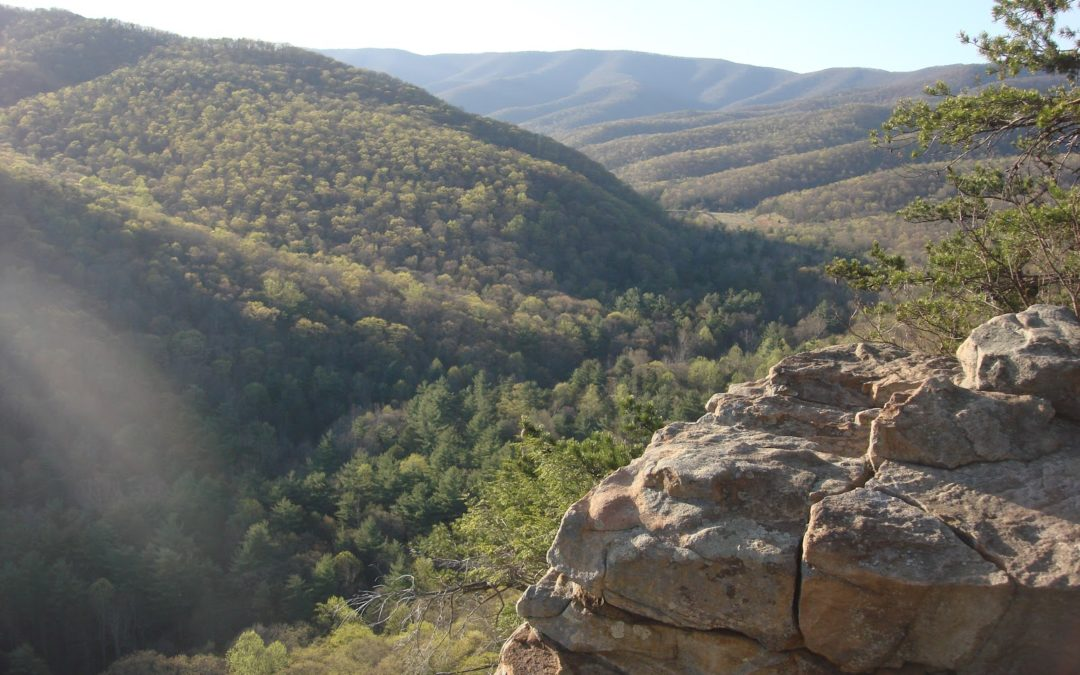 Trail to Scenic Overlook